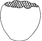 Diagram of Elephant Egg