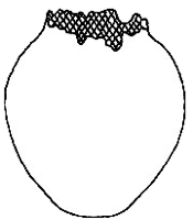 Diagram of Vase